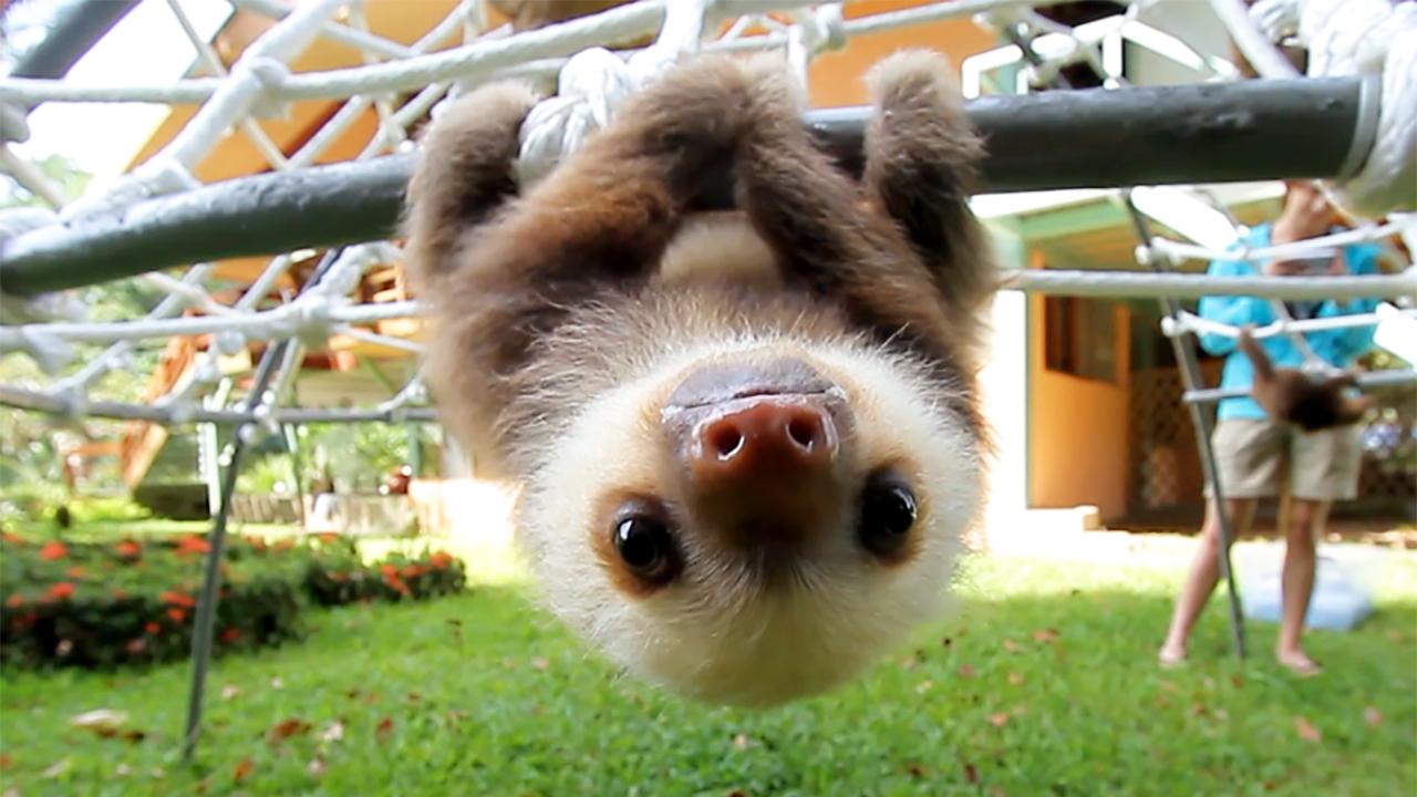 animalisttoo--0005--sloth-talk--large.thumb